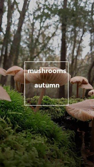 mushrooms autumn