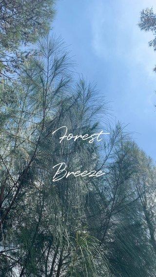 Forest Breeze