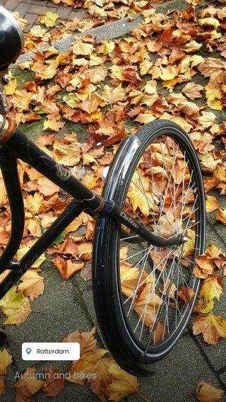 Autumn and bikes