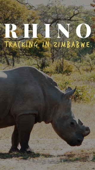 RHINO Tracking in zimbabwe
