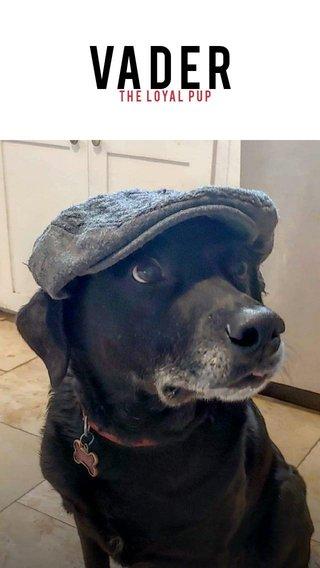 VADER the loyal pup