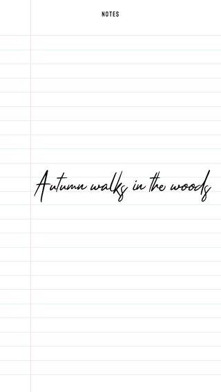 Autumn walks in the woods