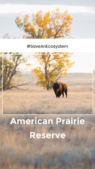 American Prairie Reserve #SaveAnEcosystem
