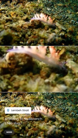Crawling of Nudibranch (Sea slug) #stellerid #diving #indonesia #underwaterphotography