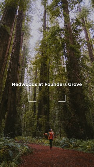 Redwoods at Founders Grove