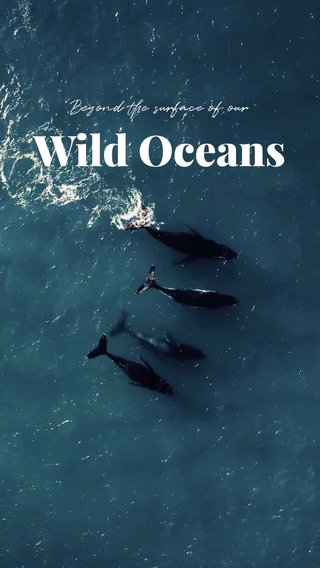 Wild Oceans Beyond the surface of our