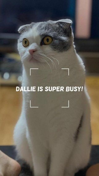 Dallie is Super BUSY!