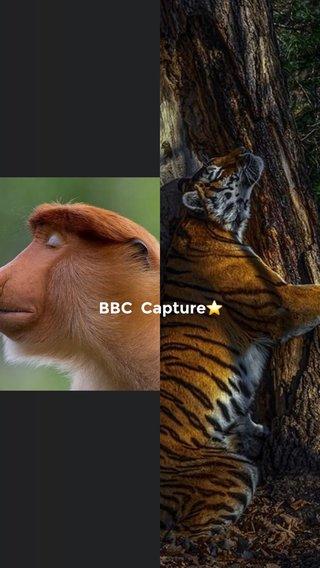 BBC Capture⭐️