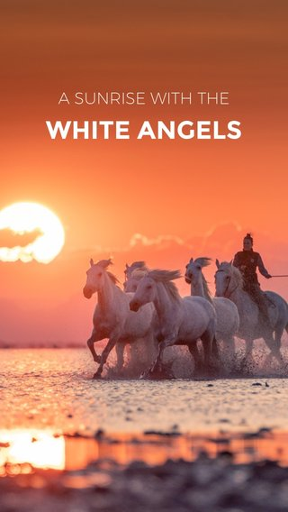 WHITE ANGELS A SUNRISE WITH THE