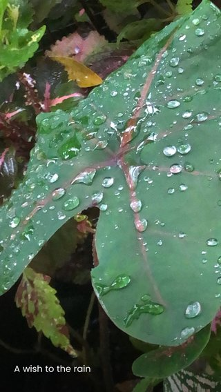 A wish to the rain