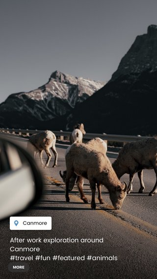 After work exploration around Canmore #travel #fun #featured #animals #mountains #trees