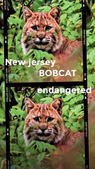 New jersey BOBCAT endangered