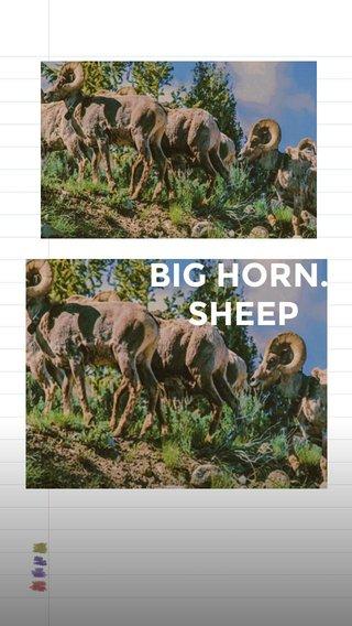 BIG HORN. SHEEP