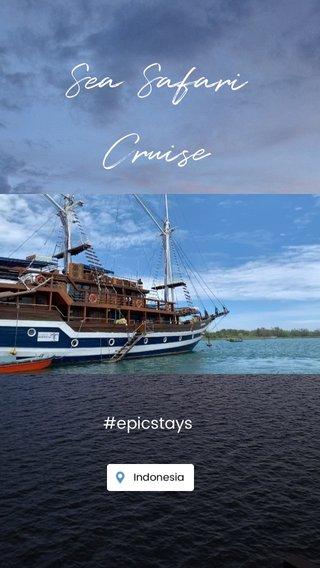 Sea Safari Cruise #epicstays