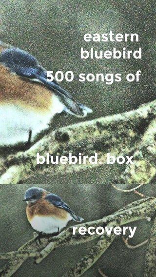 recovery eastern bluebird 500 songs of bluebird. box