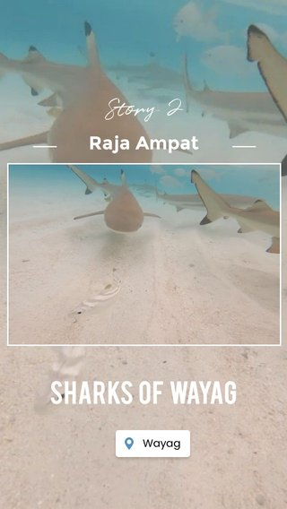 SHARKS of WAYAG Story 2 Raja Ampat