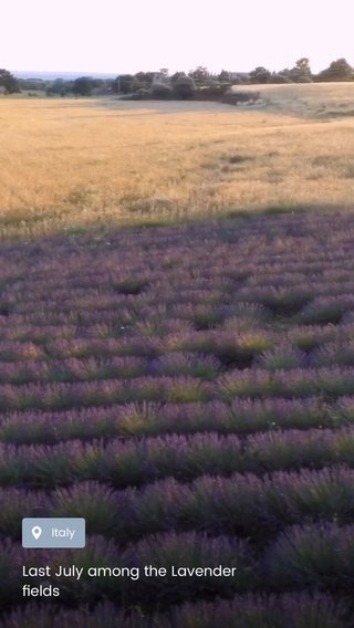 Last July among the Lavender fields