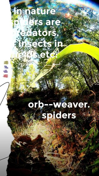 in nature spiders are predators. of insects in fields etc: orb--weaver. spiders