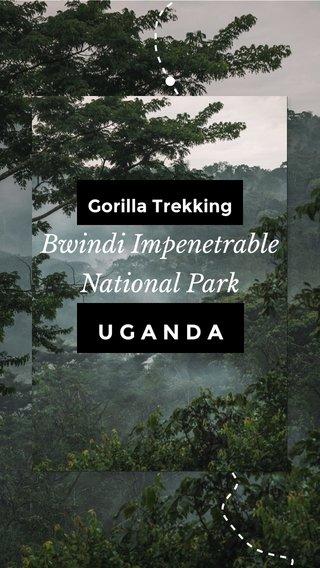 Bwindi Impenetrable National Park UGANDA Gorilla Trekking