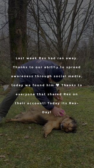 Last week Rex had ran away. Thanks to our ability to spread awareness through social media, today we found him 🤍 Thanks to everyone that shared Rex on their account! Today its Rex-Day!
