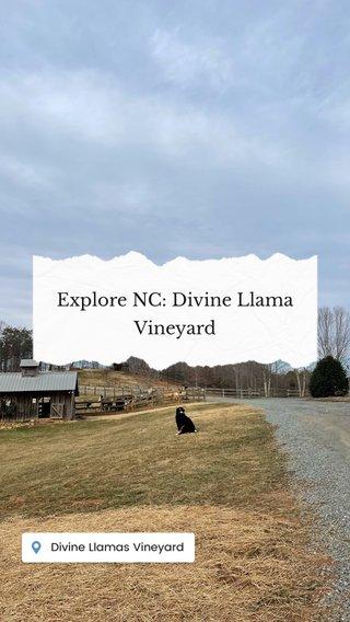 Explore NC: Divine Llama Vineyard