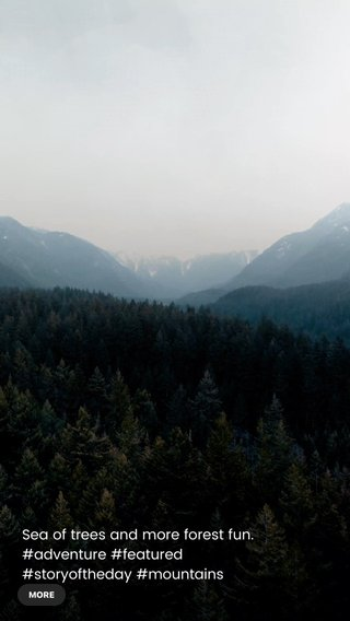 Sea of trees and more forest fun. #adventure #featured #storyoftheday #mountains #trees