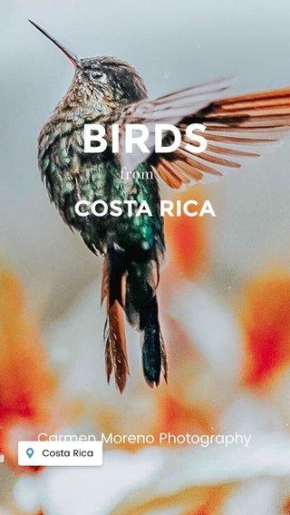BIRDS COSTA RICA from Carmen Moreno Photography