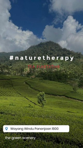 #naturetherapy tea plantation the green scenery