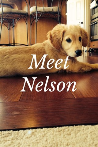 Meet Nelson