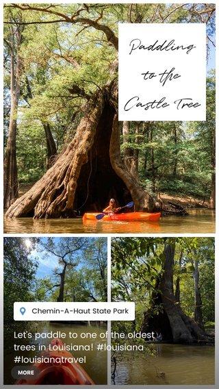 Paddling to the Castle Tree Let's paddle to one of the oldest trees in Louisiana! #louisiana #louisianatravel #lovewhereyoulive #onlylouisiana #thegreatoutdoors