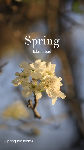 Spring Islamabad Spring blossoms