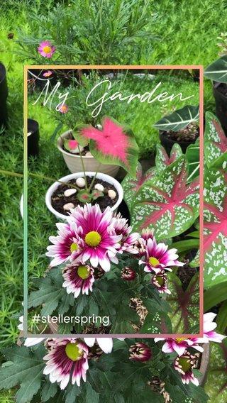 My Garden #stellerspring