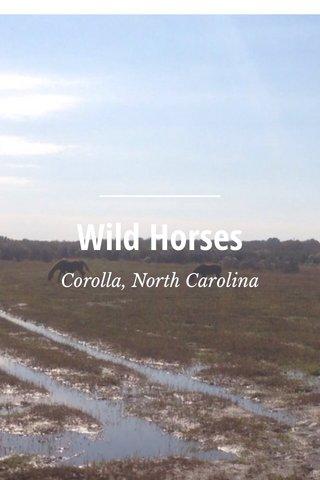 Wild Horses Corolla, North Carolina