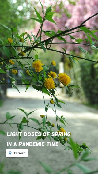 in a Pandemic time Light doses of Spring