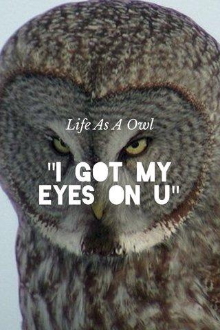 """""""I Got My Eyes On U"""" Life As A Owl"""