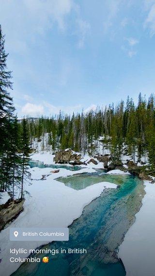 Idyllic mornings in British Columbia 🥰