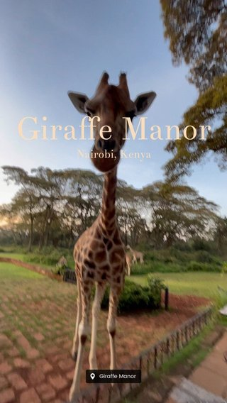 Giraffe Manor Nairobi, Kenya