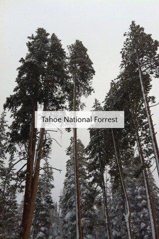 Tahoe National Forrest