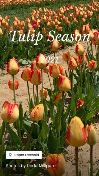 Tulip Season 2021 Photos by Linda Milligan