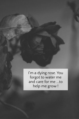 I'm a dying rose. You forgot to water me and care for me ...to help me grow !