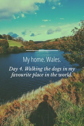 My home. Wales. Day 4. Walking the dogs in my favourite place in the world.