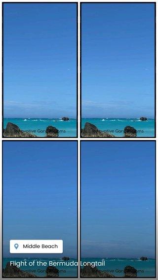 Flight of the Bermuda Longtail