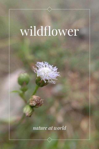wildflower nature at world