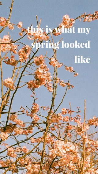 this is what my spring looked like
