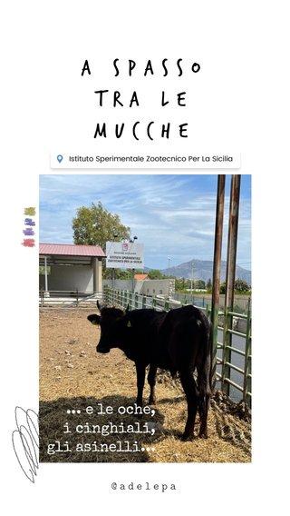 A spasso tra le mucche ... e le oche, i cinghiali, gli asinelli... @adelepa @adelepa
