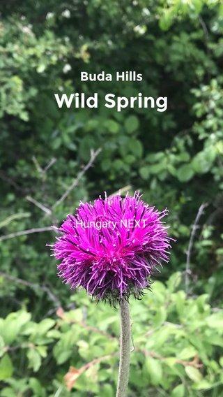 Wild Spring Buda Hills Hungary NEXT