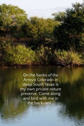 On the banks of the Arroyo Colorado in deep South Texas is my own private nature preserve. Come along and bird with me in the backyard...