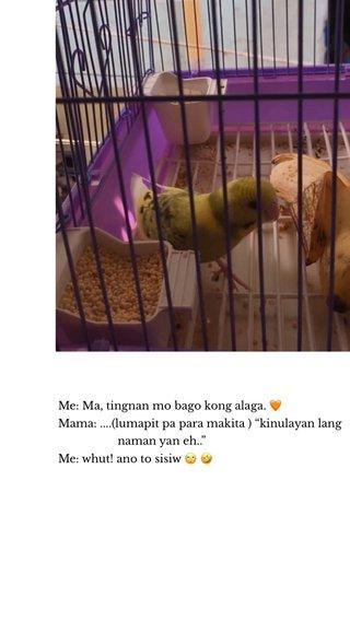 """Me: Ma, tingnan mo bago kong alaga. 🧡 Mama: ....(lumapit pa para makita ) """"kinulayan lang naman yan eh.."""" Me: whut! ano to sisiw 🙄 🤣"""