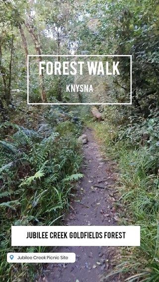 Forest walk Knysna Jubilee Creek Goldfields forest