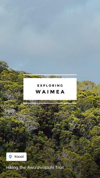 WAIMEA Hiking the Awa'awapuhi Trail. EXPLORING